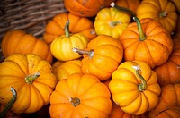 Small pumpkins in a wicker basket in Fallston, Maryland, USA.