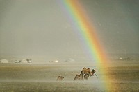 Camels under the rain with rainbow, Gobi desert, Mongolia.