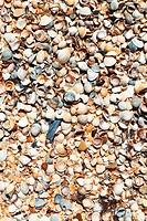 sand and seashells - beach of Azov Sea close up