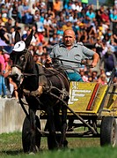 Competitors ride their donkey carts during a race competition in the town of Gurkovo during an unique donkey exhibition and donkey cart race, east of ...