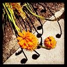 Spring flowers on a sidewalk with shadows