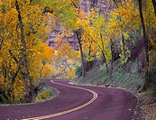 Fall colors have arrived at Zion National Park, Utah.