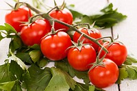 Fresh cherry tomatoes on a branch with parsley