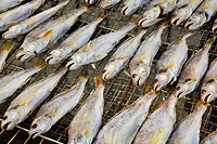 Dried salt Fish