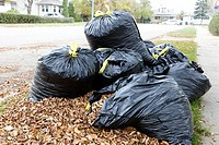 pile of dead collected leaves and bagged leaves ready for collection Saskatchewan Canada.