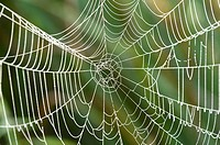 Close-up of a spiderweb in a meadow on early morning in autumn.