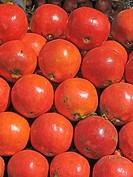 Fruits of Pomegranate, Punica granatum L. Punicaceae