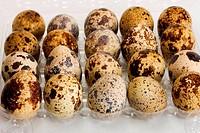 eggs quail