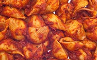 Shell Shaped Pasta and Red Sauce
