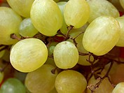 Grape of vitis