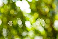 bokeh of blurred green leafage