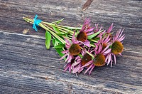 medical herbs echinacea flowers bunch on ancient wooden background