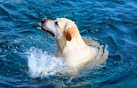 Sea loving splashing dog