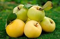 Heap of apples on green grass
