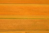 Fields aerial view