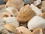 SeaShell Close-up