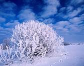 Winter, Podlasie region, Poland