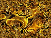 Yellow Roses Abstract