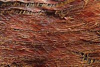 texture of palm tree bark