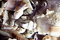 Micro Photo of Sea Shell Sand