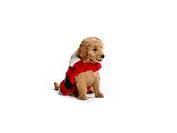 puppy in santa costume