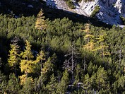 Wimbachgries Valley, famous for its huge debris flows, in the heart of the national park Berchtesgaden between iconic Mt. Watzmann and Mt. Hochkalter....