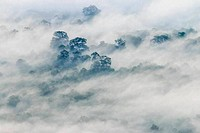 Fog covered forest on the mountain