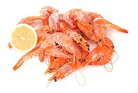 common prawn in front of white background