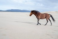 Brown horse on a beach