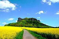 way between golden fields