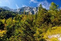 Auf dem Weg zur Halsalm, Nationalpark Berchtesgaden, Germany