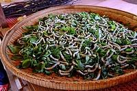 Cambodia, handicraft, silk work, silkworms breeding.