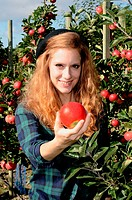 Young redhaired woman holding a red apple in apple harvest harvest in Kivik, Scania, Sweden.