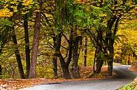 Italy, Trentino region, colors of autumn.
