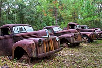 Old rusted trucks and cars.