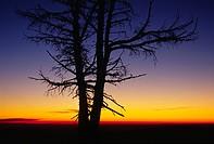 Snag sunrise at Cloud Cap, Mt Hood National Forest, Oregon.