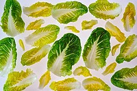 Romana Salad Leaves.