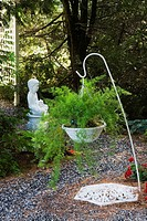 Hanging basket with Asparagus officinalis plants on white metal stand and buddhist monk sculpture in private backyard country garden in summer, Quebec...