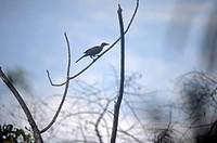 A bird in Raja Empat islands, West Papua, Indonesia