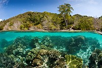 Corals in shallow Water, Raja Ampat, West Papua, Indonesia.