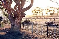 Farm land, country Victoria, Australia.