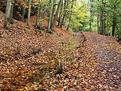 Carpet of Fallen Leaves at Skipton Castle Woods in Autumn Skipton North Yorkshire England.
