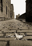 Cobbled road at the rear of warehouses in the Albert Dock, designed by Jesse Hartleyands opened in 1846. It was the first structure in Britain to be b...