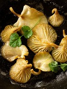 Yellow Oyster mushrooms sauteed in butter in a frying pan.