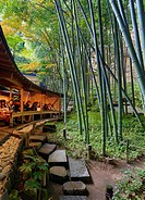 Japan, Kamakura City, Hokoku-ji Temple, Bambu forest.
