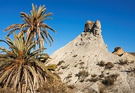 Bare ridges of eroded sandstone and palm trees in the Tabernas Desert, Europe's only true desert. Almeria province, Andalusia, Spain.