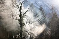 Sun Rays Breaking through Trees in the Salzkammergut Cultural Heritage Region, Austria