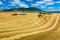 Cereal farm. Tierra Estella County, Navarre, Spain, Europe.
