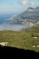 Oak above the mountain, Mola de Planícia, 934 mts, Banyalbufar, Sierra de Tramuntana, Mallorca, balearic islands, spain, europe.
