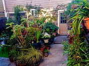 San Francisco, CA, USA, Private Garden in Air BNB Townhouse Tourist Rental.